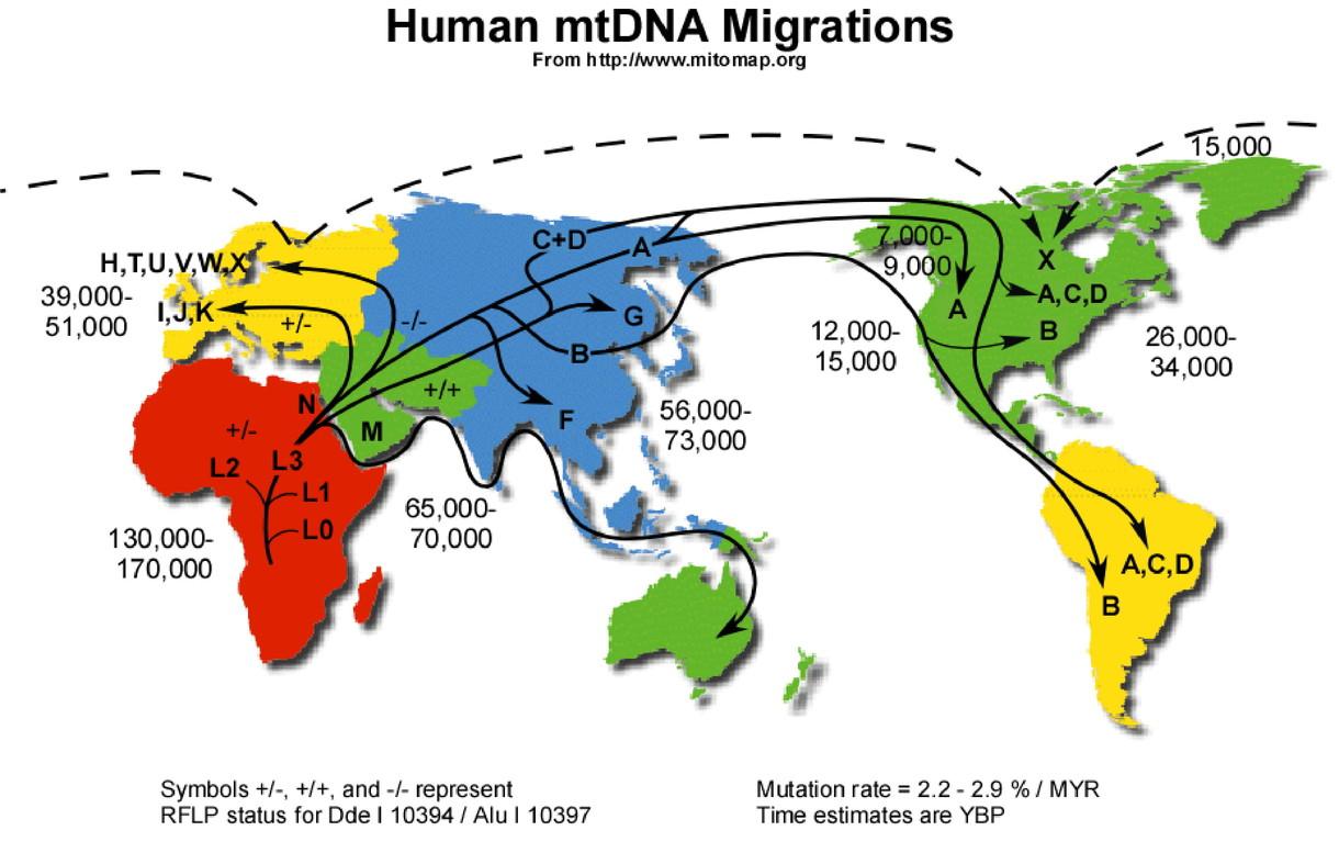Weltweite Migrationsaktivitäten anhand mitochondrialer Haplogruppen